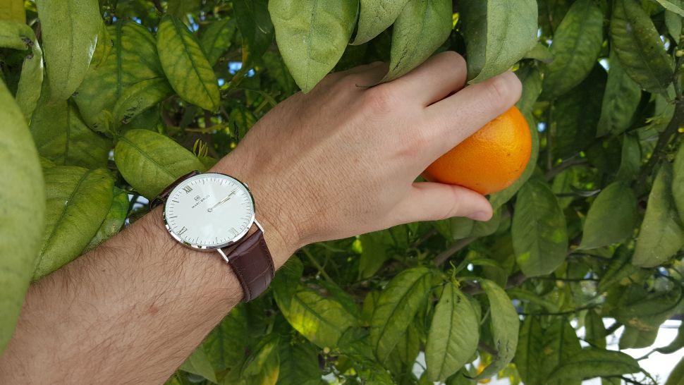 marc-brug-watches-and-ripe-oranges